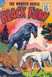 Cover Thumbnail for Black Fury (Charlton, 1955 series) #3